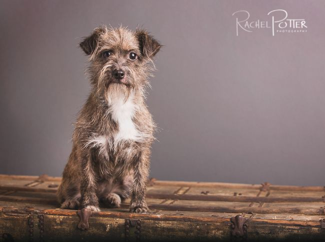 Getting a dog to sit still and look at the camera during pet photography is quite a challenge. Follow these steps to get THE shot you will love!