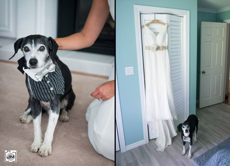 Port Dover Wedding. Dog dressed as groom guarding the wedding dress and beside the bride.  Tuxedo for your most loyal friend. Dog in a silver tie and pinstripes.