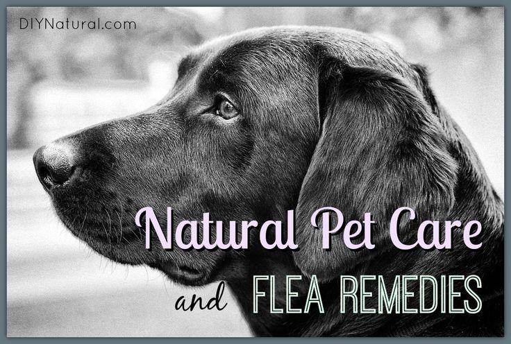 Natural Ways To Kill Fleas On My Dog