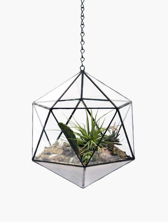 25 beste idee n over sappige terrarium op pinterest terrarium terrarium planten en cactus - Verwijderbare partities ...