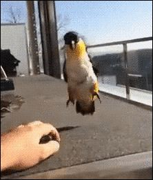 Funny Love Bird's Dance Routine (gif)