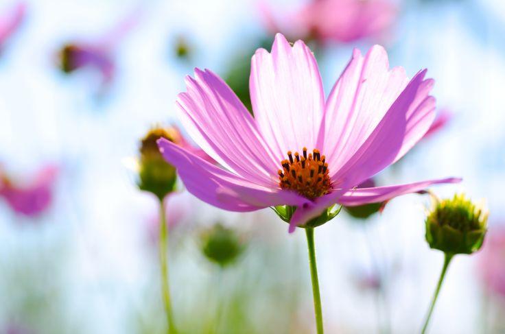 Met professioneel tuinonderhoud geniet je pas echt van een prachtige tuin. En t/m 31 december 2014 profiteer je van een verlaagde BTW regeling van 6% voor tuinonderhoud, tuinontwerp en tuinaanleg.