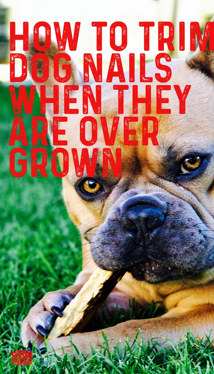 How to trim dog nails that are overgrown complete guide