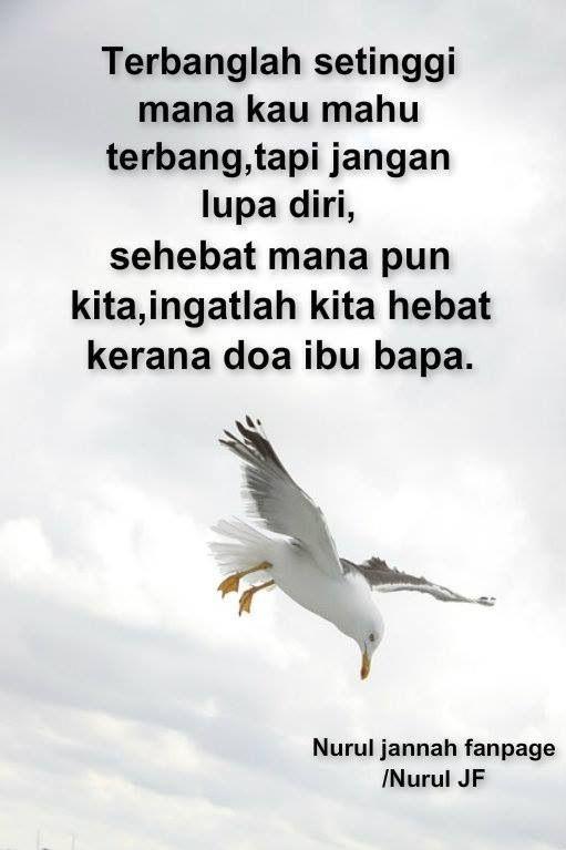 Terbanglah setinggi mana kau mahu terbang, tapi jangan lupa diri...