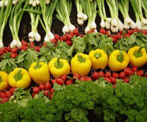Göz Sağlığınızı Doğal Yollarla Koruyun!Yağda eriyen vitaminler sınıfından olan A vitamini; karaciğer, yumurta, süt, balık ve balık yağı ile tereyağı gibi hayvansal kaynaklarda bol miktarda bulunuyor. Bunların yanı sıra brokoli, havuç, biber, kabağın içinde bulunduğu sarı ve yeşil sebzeler ile sarı meyvelerden de elde edilebiliyor.      Yazının Devamı: Göz Sağlığınızı Doğal Yollarla Koruyun!   Bitkiblog.com   Follow us: @bitkiblog on Twitter   Bitkiblog on Facebook