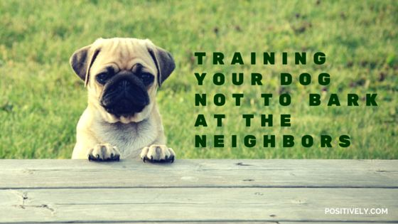 How To Train Dog Not To Bark At Door