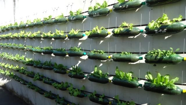 Utilizando as garrafas é possível cultivar pequenos vegetais, temperos ou ervas. Acesse agora e saiba como fazer sua horta vertical com garrafa pet.
