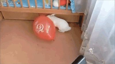 21 GIFs of Hilarious Balloon Freakouts from GifGuide