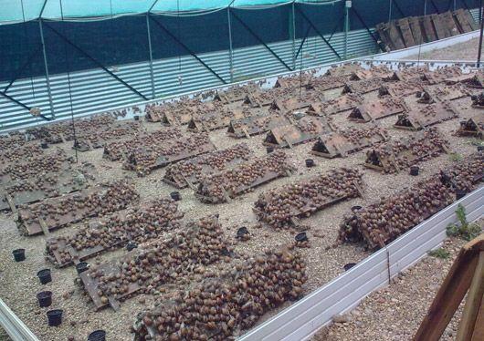 Intensive Snail Farming
