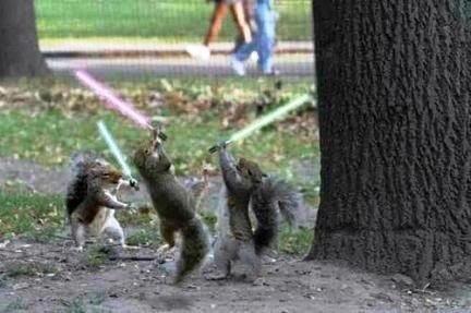 LOL: Animals, Star Wars, Funny Stuff, Humor, Funnie, Starwars