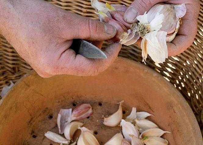 Plus de 1000 id es propos de jardins sur pinterest - Traitement naturel contre les pucerons ...