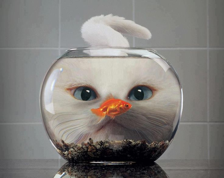 Imagine what the fish is thinking! EEeek! :))) ♥