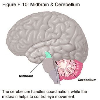 Cerebellar ataxia is a kind of nervous system degenerative disease, which means the patients present muscularhypotonia and disorder of voluntary movement coordination due to cerebellar lesions, such like cerebellar atrophy etc. NGF surgery treat cerebellar ataxia is an international advanced cerebellar ataxia treatment currently. The surgery initially created by Beijing Erkang Baiwang Hospital with many years' clinical practice and experience.