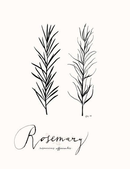 Top Rosemary Sketch Images for Pinterest Tattoos