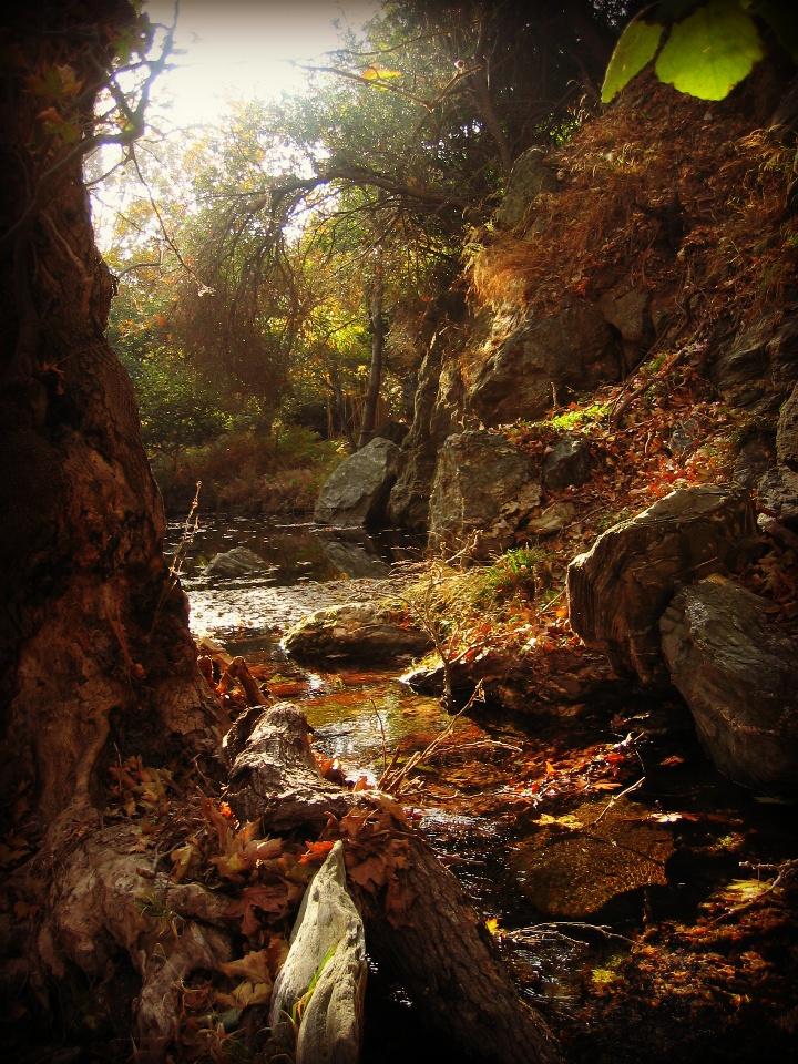 Pequena floresta em Andros, Ilhas Cyclades