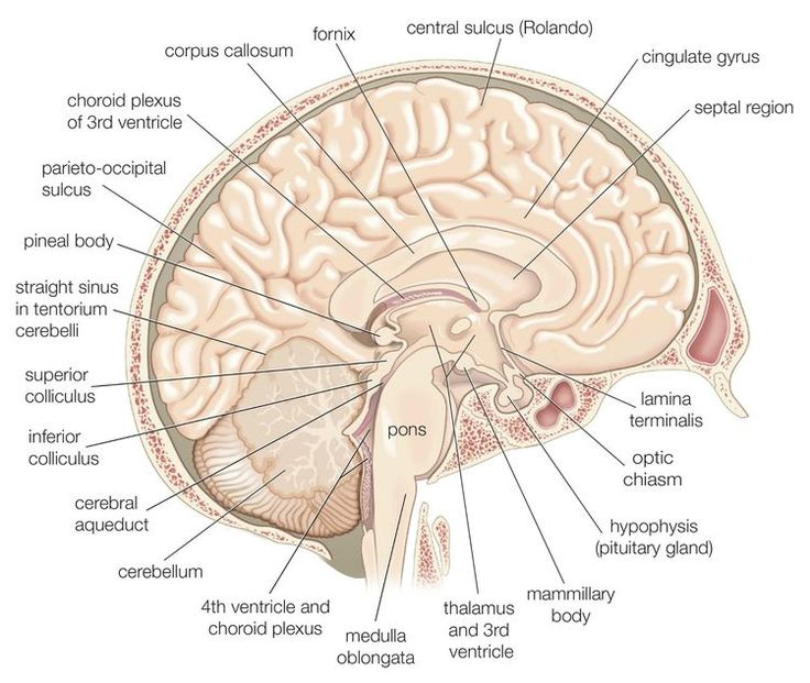 What Are The Effects Of Frontal Lobe Damage?