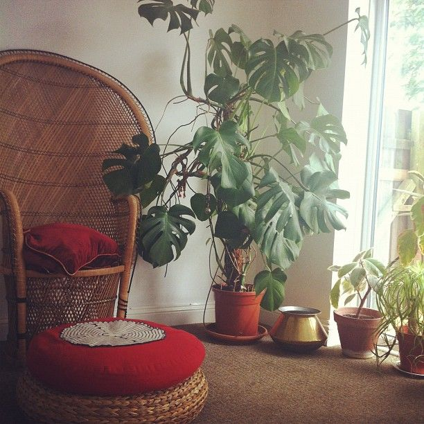 Tree Inside The House Interior Climate Controlled: 31 Best Images About Monstera