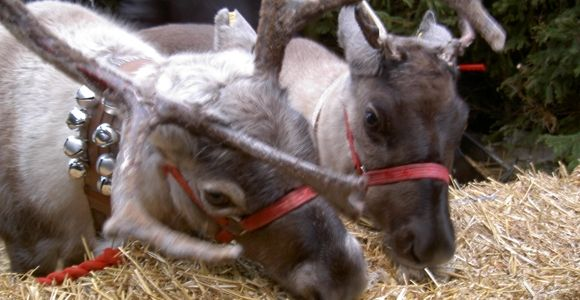 R Reindeer Real 17 Best images about O...