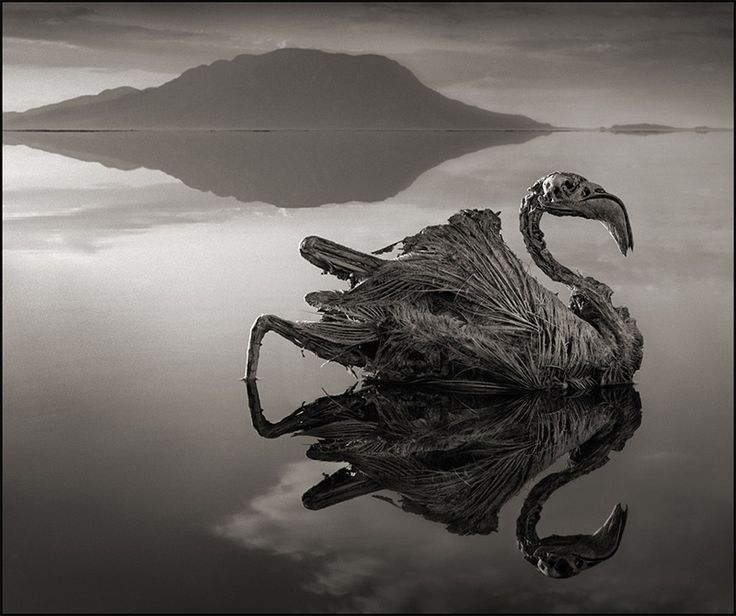 A Deadly Alkaline Lake in Africa Turns Animals into Calcified Statues