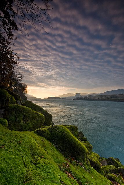 Mossy wonderland, Columbia River, #Oregon -for #travel info,tips and inspiration, visit itsoneworldtravel.com