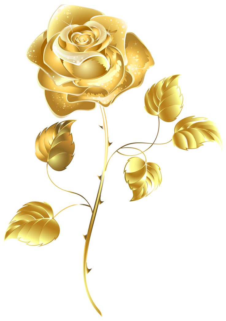 Pin by only tor on Luoghi da visitare | Gold flowers, Rose ...