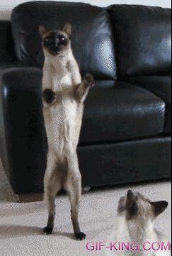 Funny Cat Lady Hookup Video Remix
