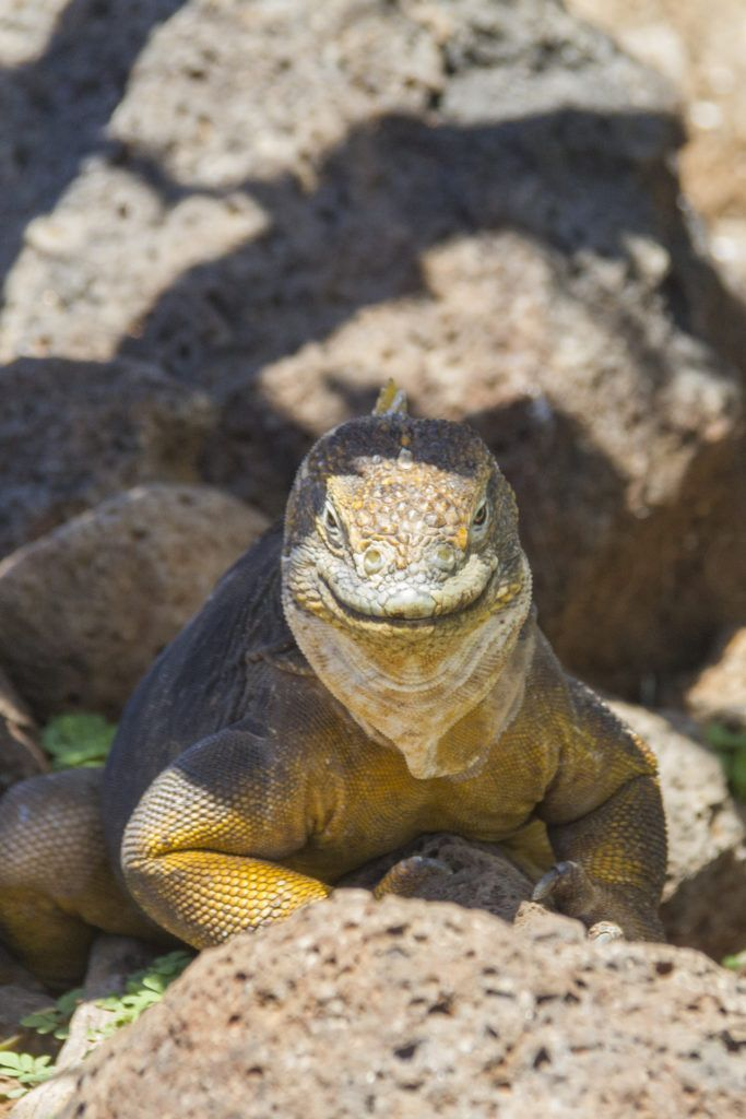 It is important to be prepared for a trip to the Galapagos Islands. Here are my top tips on How To Prepare For A Trip To The Galapagos Islands.