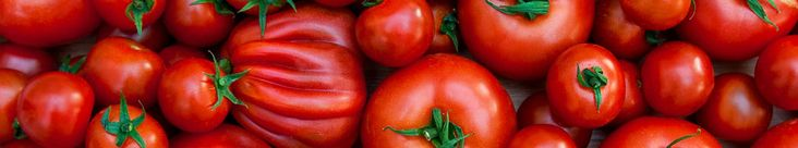 The taste of homegrown tomatoes right off the vine is truly a small slice of heaven.Read our planting and care instructions to learn how to growaward winning tomatoes! SOIL: Well-drained soil that is high in organic matter is best. If your soil tends to be heavy or sandy, dig in Sloat Loam Builder. Sloat Forest …