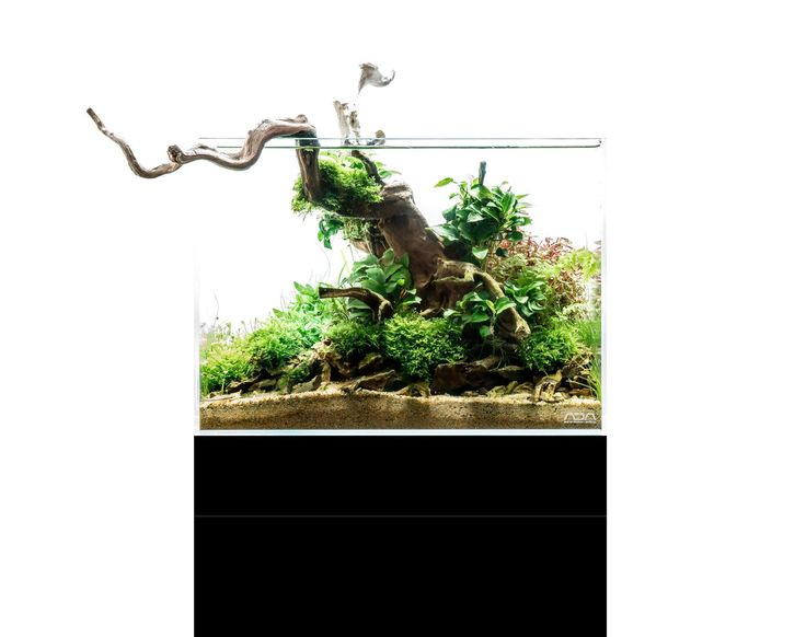465 best images about aquascaping inspiration on pinterest