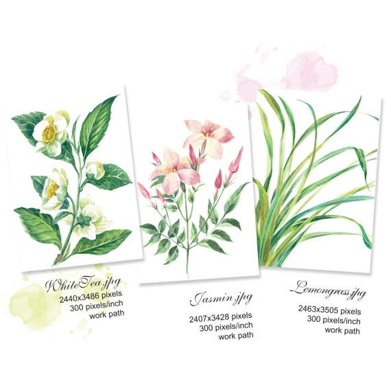 Printable Watercolour Painting Botanical print set: White