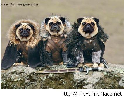 Fantastic pugs funny new 2014