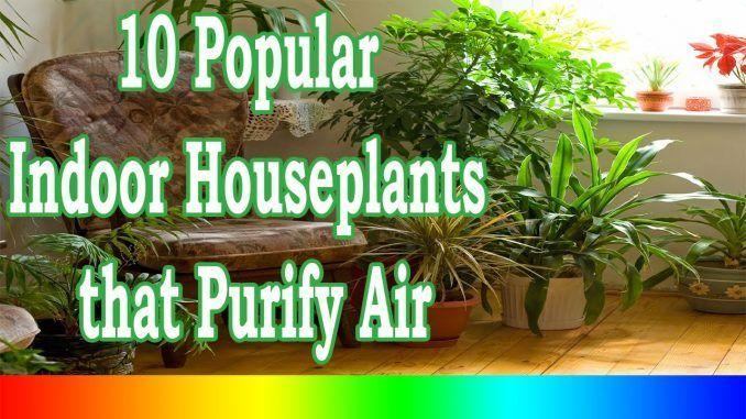Best Indoor Plants – 10 Popular Indoor Houseplants that Purify Air #houseplantsairpurifying