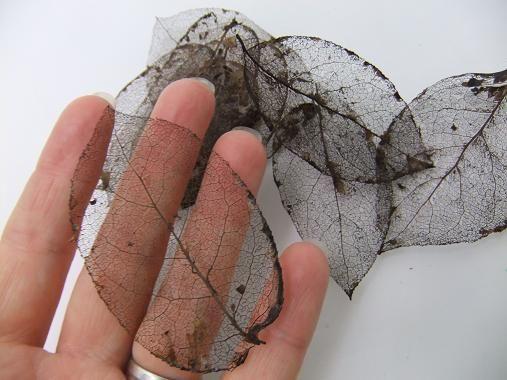 Réalisez des squelettes de feuilles pour décorer votre intérieur. DIY