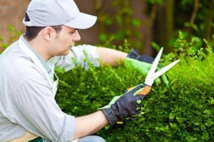 Preventing Spring Time Allergies  http://mrlandscaper.ca/preventing-spring-time-allergies/