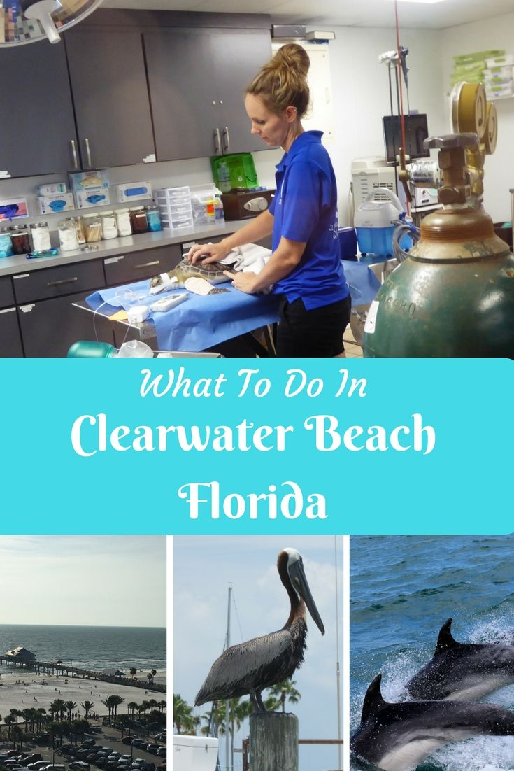 What to do in Clearwater Beach, Florida including dolphin watching, visiting Clearwater Beach Aquarium, Frenchy's seafood cafes, Pier 60 and Sand Key beach