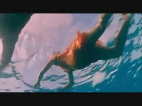 Dolphin saves a pregnant lady and men from a shark