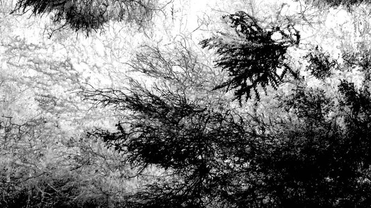 Vincent Kenter: Hideout/Borders (In the Reeds)