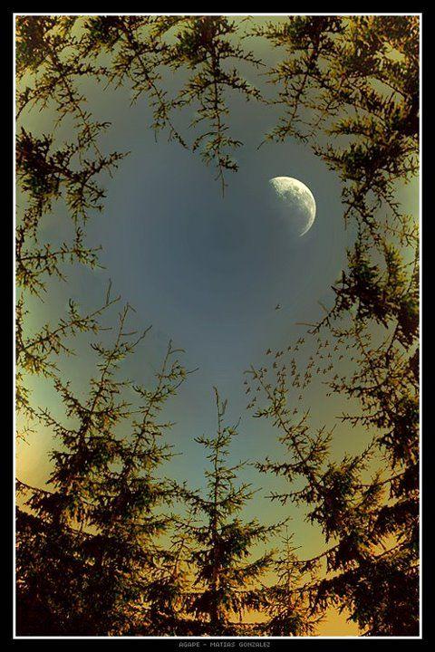 The moon through heart shaped trees