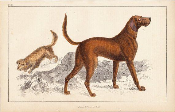 1840 Antique DOG print domestic dog  by TwoCatsAntiquePrints, $24.00