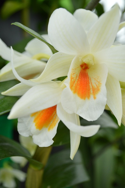 Orchids Galore by i love fotos, via Flickr
