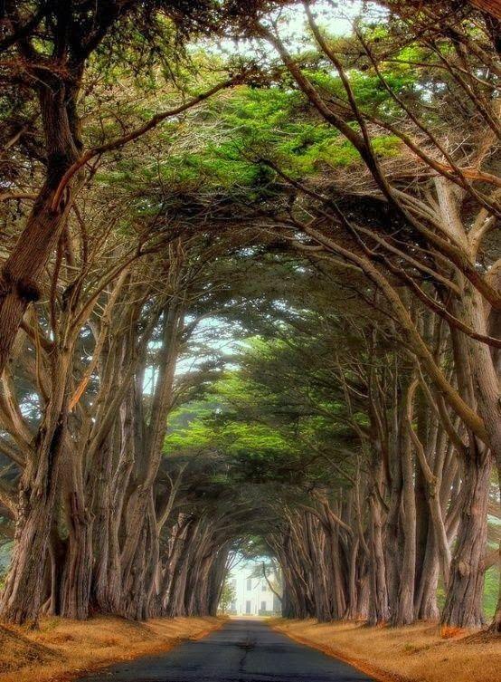 Point Reyes National Seashore, California. Now that's a tree tunnel...... Weeeeeeeeeee