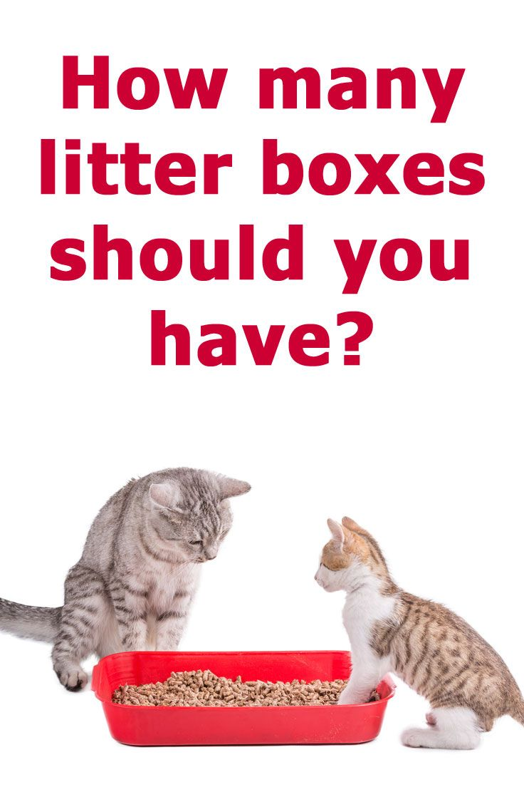 How Many Litter Boxes Per Cat Should You Have Cat Training Litter Box Cats Cat Training