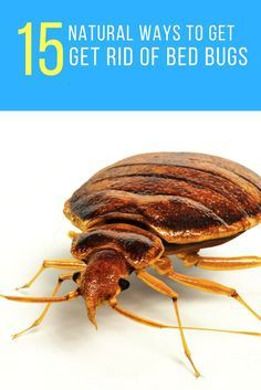 Are Bed Bugs Driving You Insane? Here Are 15 Ways to Get Rid of Them Naturally…