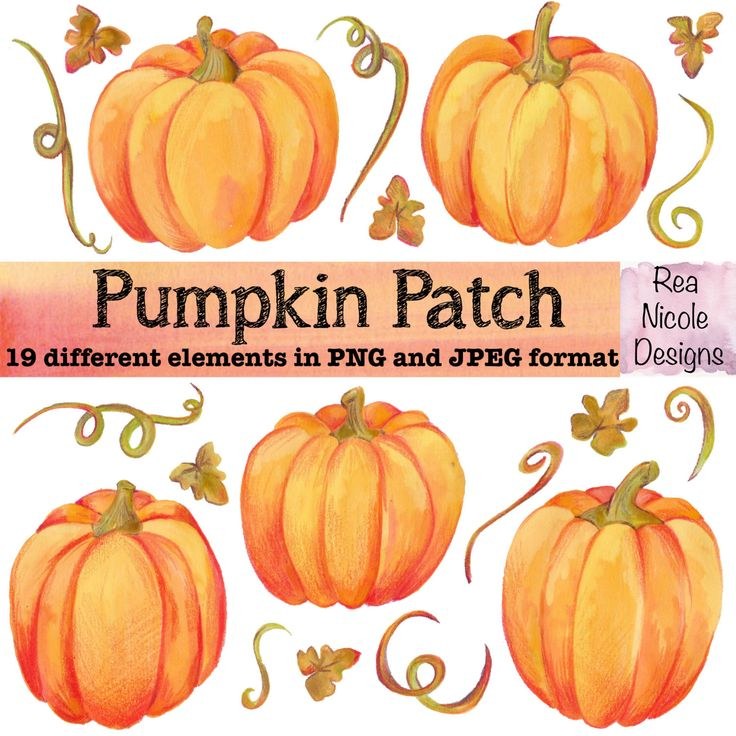 A personal favourite from my Etsy shop https://www.etsy.com/uk/listing/469188072/pumpkin-patch-clipart-hand-drawn