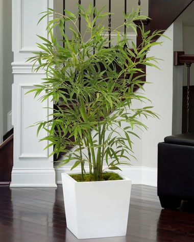 Office Decorating Made East with Silk Plants | Realistic Silk Asian Bamboo Plant - Conference Rooms