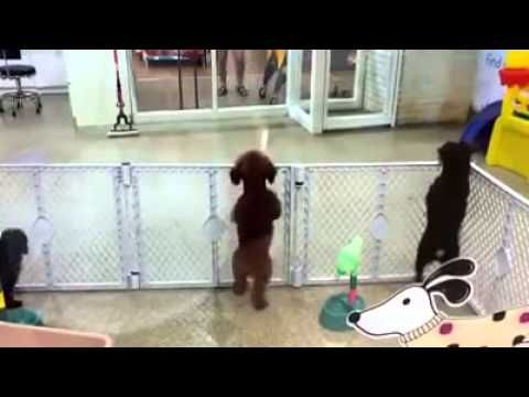 Everyone On Facebook Loves This Puppy That Saw Its Owner And Went Ballistic. So adorable!!!!!