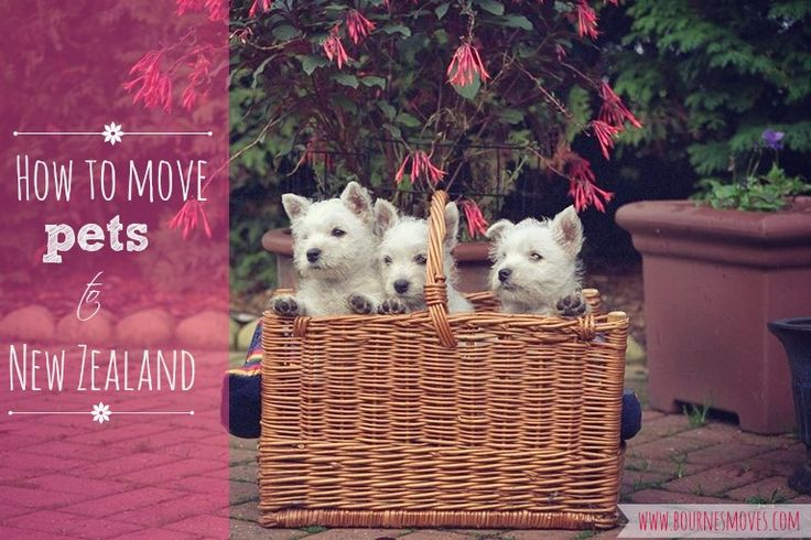 How to move dogs and cats to New Zealand