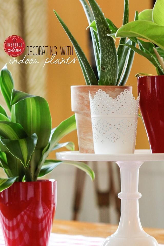 Indoor Plants   Inspired by Charm