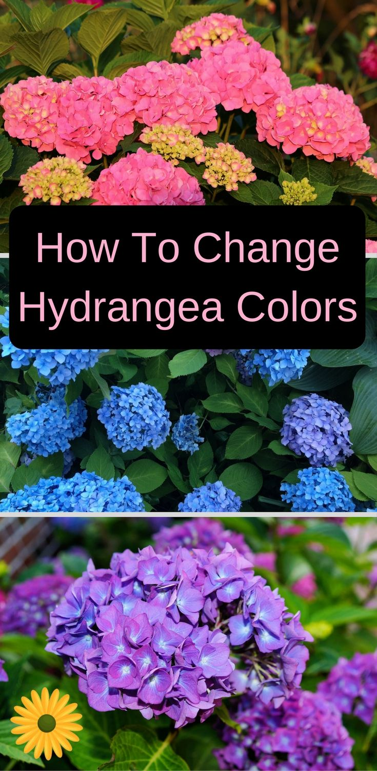 If you love hydrangeas and wish to change their color - Decoraciones jardines ...