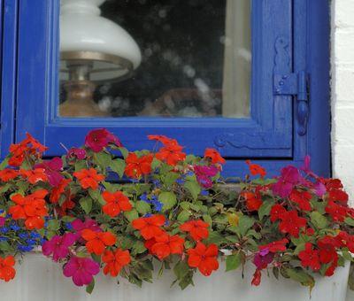 Jak zazimovat balkonovky? 4 nejčastější chyby!
